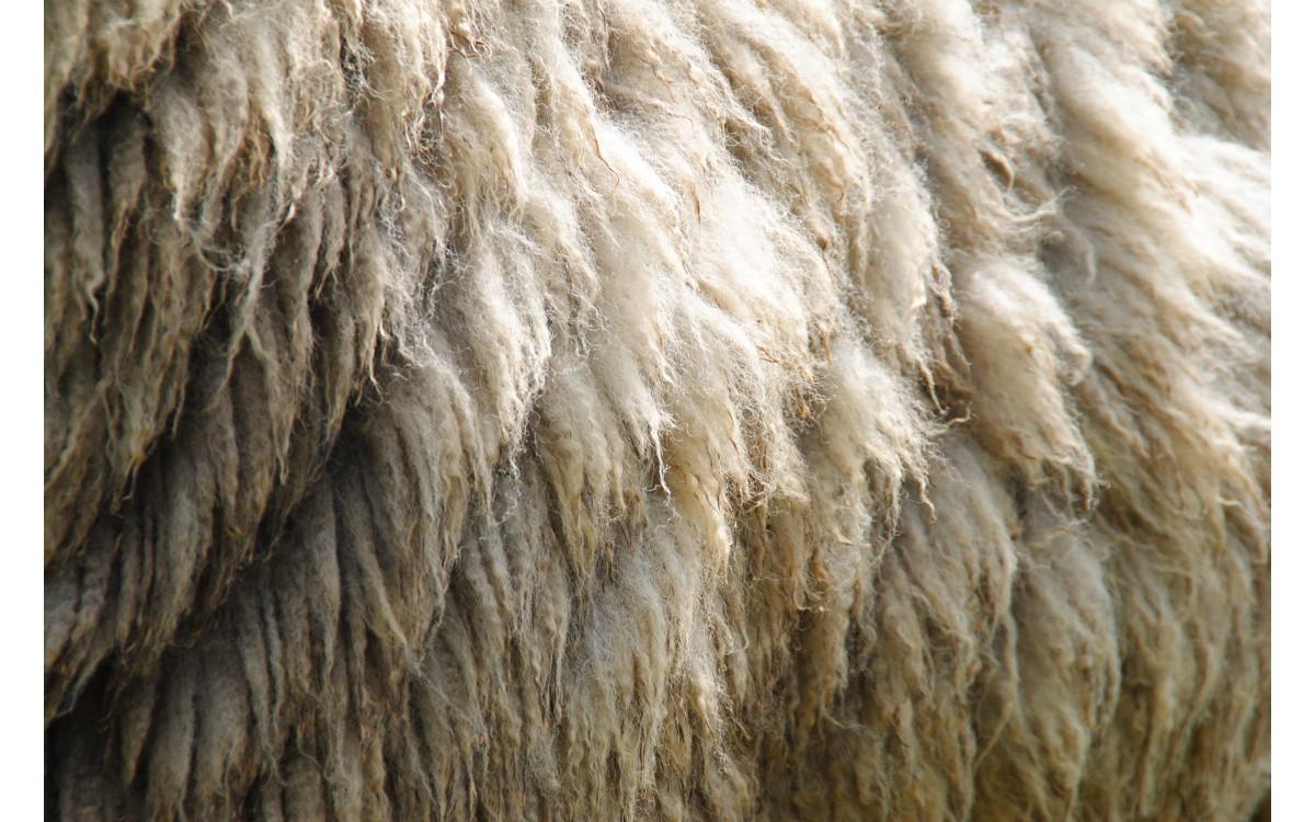 Hoe houd je wolproducten mooi en fris?