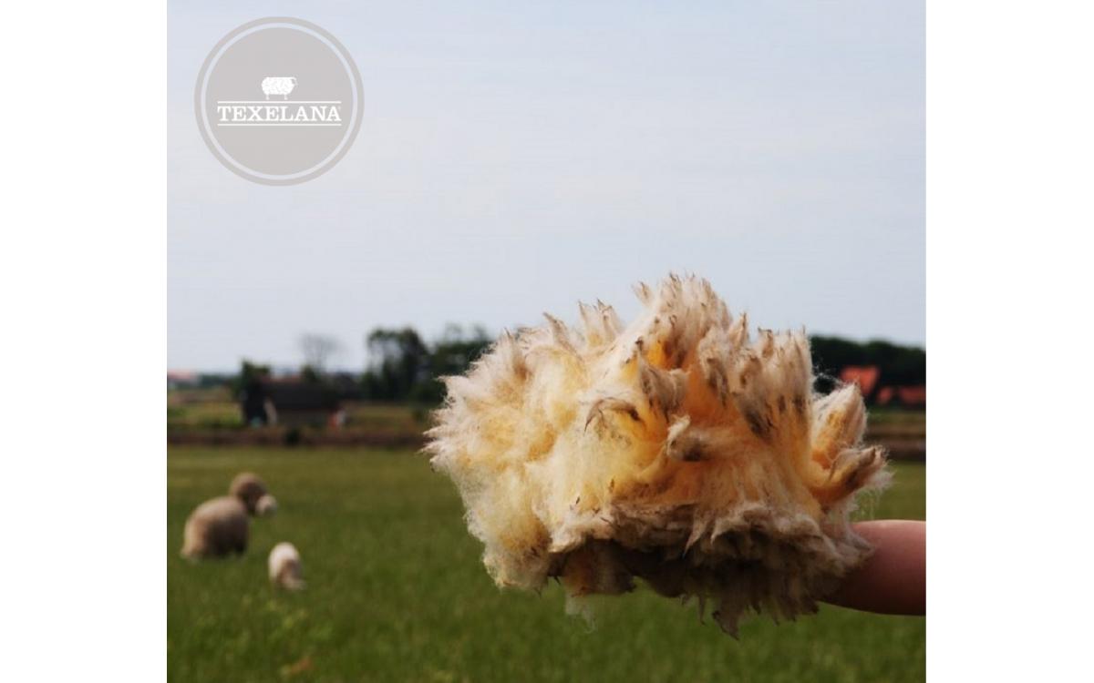 Texelana helpt bij het kiezen van een dekbed | Texelana Wolproducten