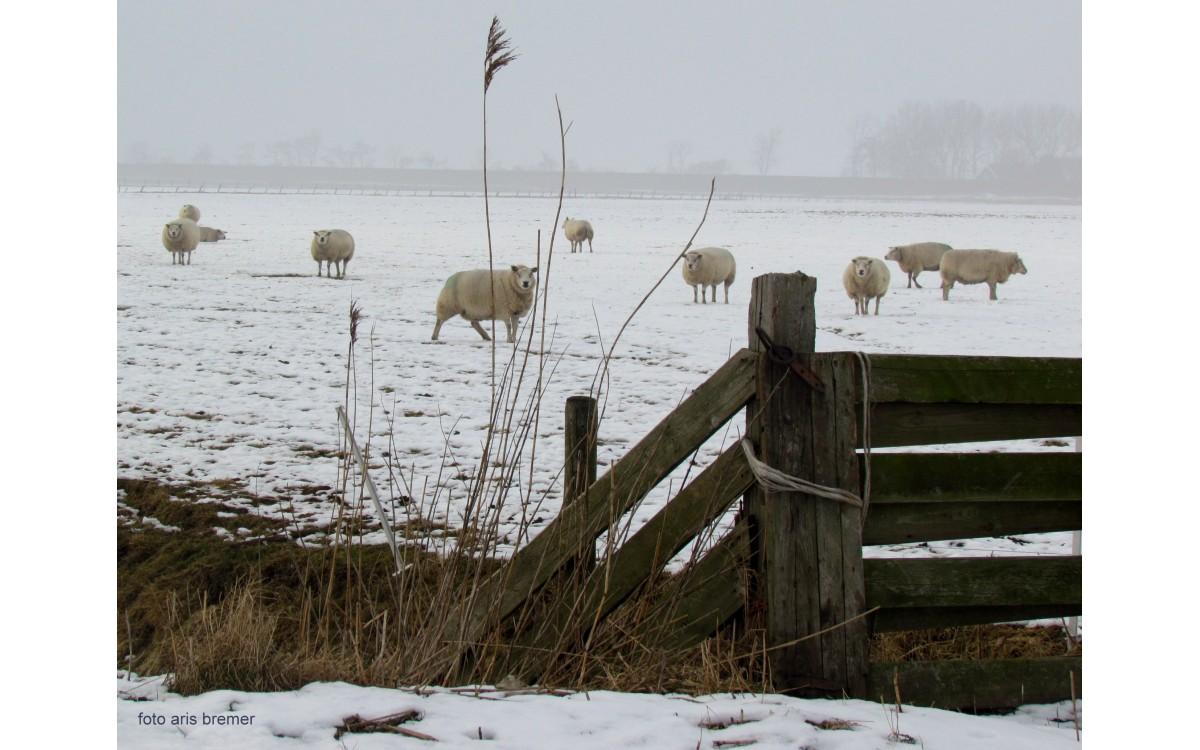 Drie onmisbare producten van schapenwol