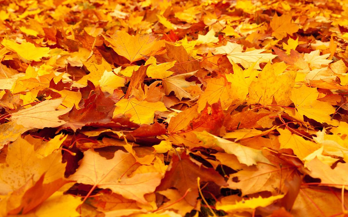 Ben jij al voorbereid op de herfst?